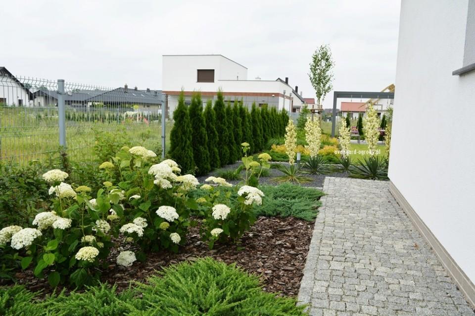 rabata ogrodowa z hortensjami
